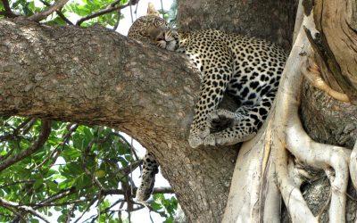 Vous avez toujours rêvé de partir en Tanzanie ?
