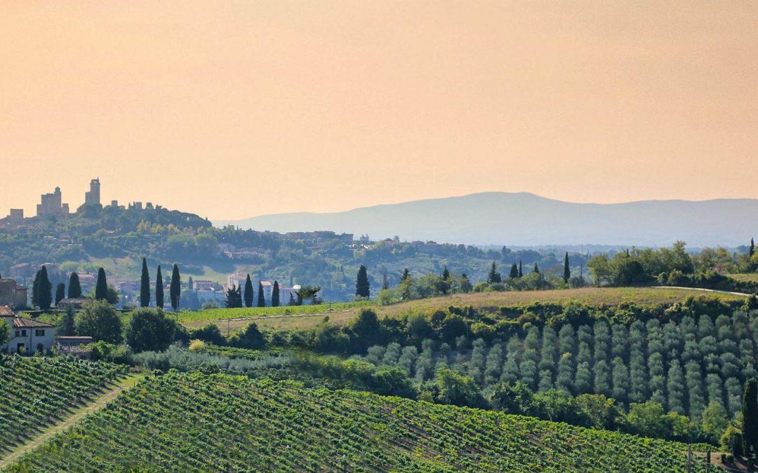 Comment trouver de l'huile d'olive de qualité ?